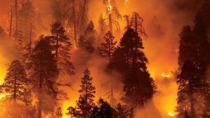 WWF: Χάθηκαν περίπου 430 εκατ. στρέμματα δασών, στο διάστημα 2004-2017