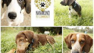 Υιοθεσία αδέσποτων στο Costa Navarino