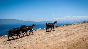 Ενισχύσεις στους αιγοπροβατοτρόφους της Κρήτης