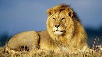 Ζιμπάμπουε: Νέο σκάνδαλο με κυνηγό λιονταριών