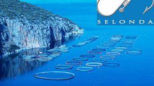 Σελόντα: Σημαντική αύξηση πωλήσεων και εξαγωγών