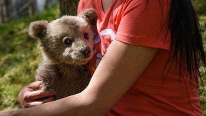Στη αγκαλιά του Αρκτούρου το ορφανό αρκουδάκι Λουίτζι