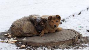 Κοζάνη: Παράτησαν κουταβάκια έξω στο χιόνι και το κρυο