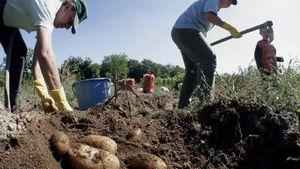 Συνήγορος του Πολίτη: Μόνο στους αγρότες δεν καταλήγουν οι επιδοτήσεις