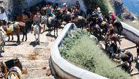 Σαντορίνη: Επιτέθηκαν σε φιλόζωους που διαμαρτύρονταν για τα γαϊδουράκια