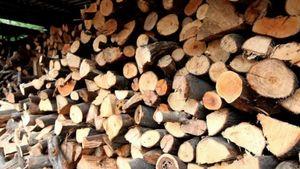 Σε απόγνωση 300 οικογένειες στην Κοζάνη: Το χιόνι έκλεισε την πρόσβαση σε καυσόξυλα