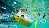 WWF: 570.000 τόνοι πλαστικού καταλήγουν στη θάλασσα κάθε χρόνο