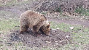 ΑΡΚΤΟΥΡΟΣ: Ορφανό αρκουδάκι σώθηκε από αιχμαλωσία στην Αλβανία