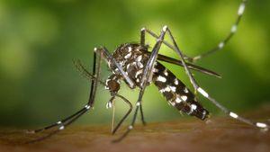 Περιφέρεια Αττικής: Ξεκίνησαν οι ψεκασμοί για τα κουνούπια