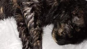 Μυτιλήνη: Πυροβόλησε γάτα με αεροβόλο γιατί... του έτρωγε τα καναρίνια - Ο δράστης συνελήφθη
