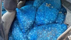 """""""Επικίνδυνος"""" μεζές: Ένας τόνος όστρακα κατασχέθηκε στο Πόρτο Λάγος"""