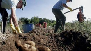 ΟΠΕΚΕΠΕ: Πληρώνει τις αγροτικές επιδοτήσεις