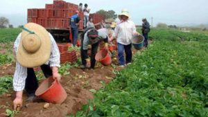 Το απόγευμα οι πιστώσεις των αγροτών από τις ενισχύσεις ΟΠΕΚΕΠΕ