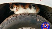 Η ΓΓ Πολιτικής Προστασίας για τα γατάκια στα καπό