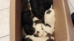 Ανδρίτσαινα: Πέταξαν σε γκρεμό 18 κουτάβια
