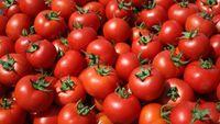 """Ντομάτες """"δηλητήριο"""": Κατασχέθηκαν 441 κιλά ντομάτας Αλβανίας με υπολείμματα φυτοφαρμάκων"""