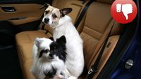 Nissan: Συμβουλές για την ασφάλεια των κατοικιδίων, ενόψει της National Dog Day, στις ΗΠΑ