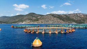 ΥΠΑΑΤ: Εγκρίθηκε ο Οδηγός Ευζωίας Μεσογειακών Ιχθύων