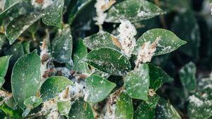 ΕΕ: Δράσεις έναντι 20 βλαβερών μικροοργανισμών για την υγεία των φυτών
