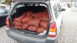 720 κιλά ακατάλληλα όστρακα κατασχέθηκαν στη Καβάλα