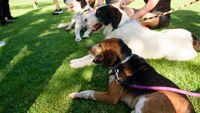Costa Navarino και PURINA: Τριήμερο υιοθεσίας αδέσποτων ζώων