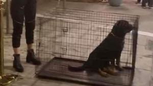 Θεσσαλονίκη: Χαμός με δυο ροτβάιλερ σε μικρά κλουβιά έξω από γνωστό κλαμπ