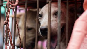Η Κίνα προχωρά στην απαγόρευση κατανάλωσης σκύλων