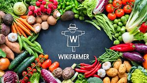 Wikifarmer: Ο «Έλληνας αγρότης» που κατακτά τον κόσμο φέρνει τα προϊόντα στην πόρτα μας